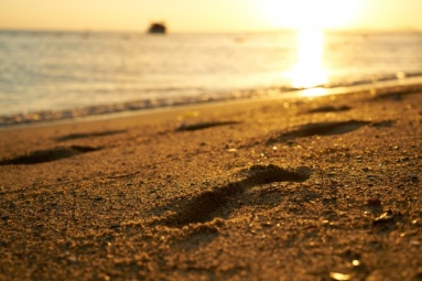 close-up-of-seashore-at-sunset_1122-1344